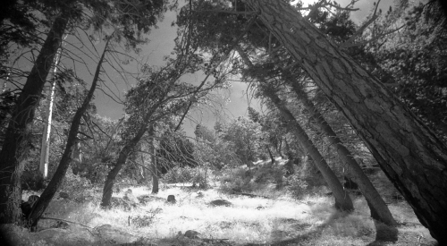 The Woods, Lake Arrowhead, 2010