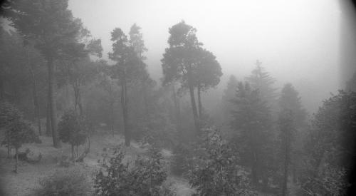Twin Peaks, 2010