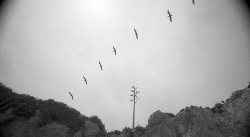 Birds, El Matador State Beach, 2014